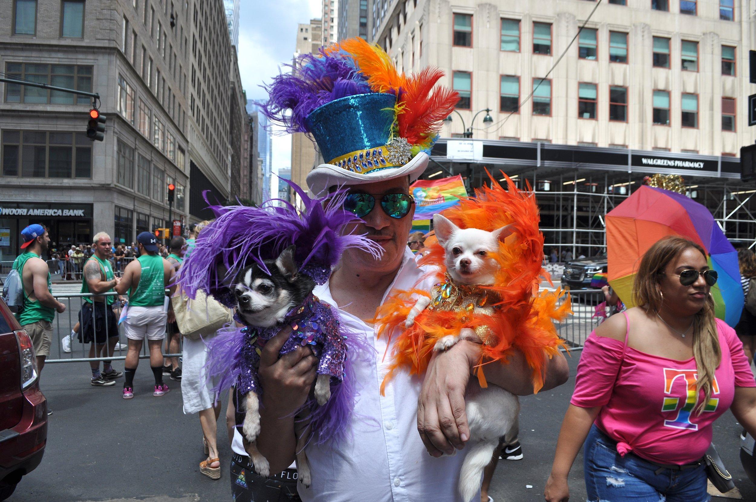 Pride Dogs T.JPG