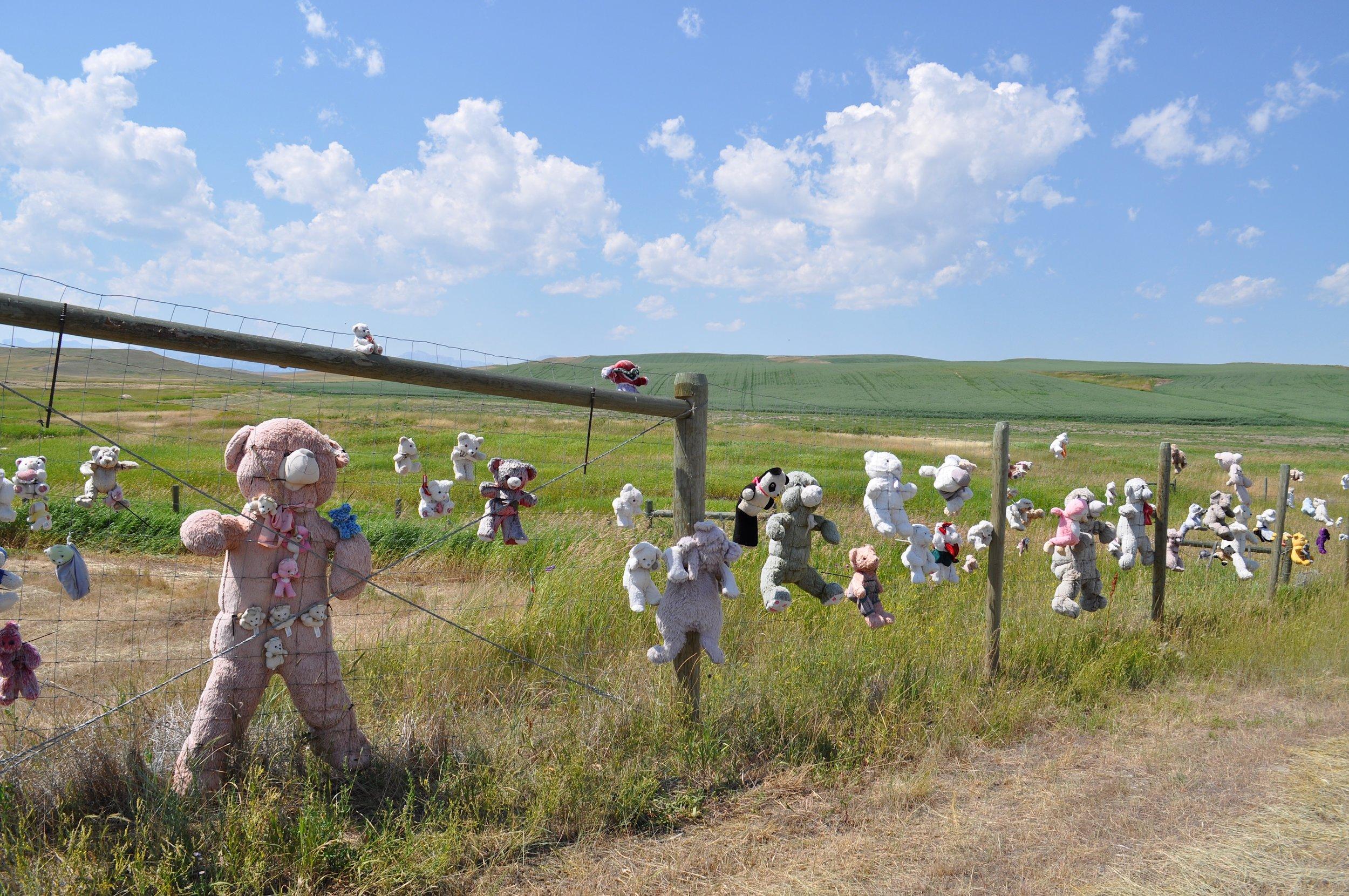 Bear Fence T.JPG