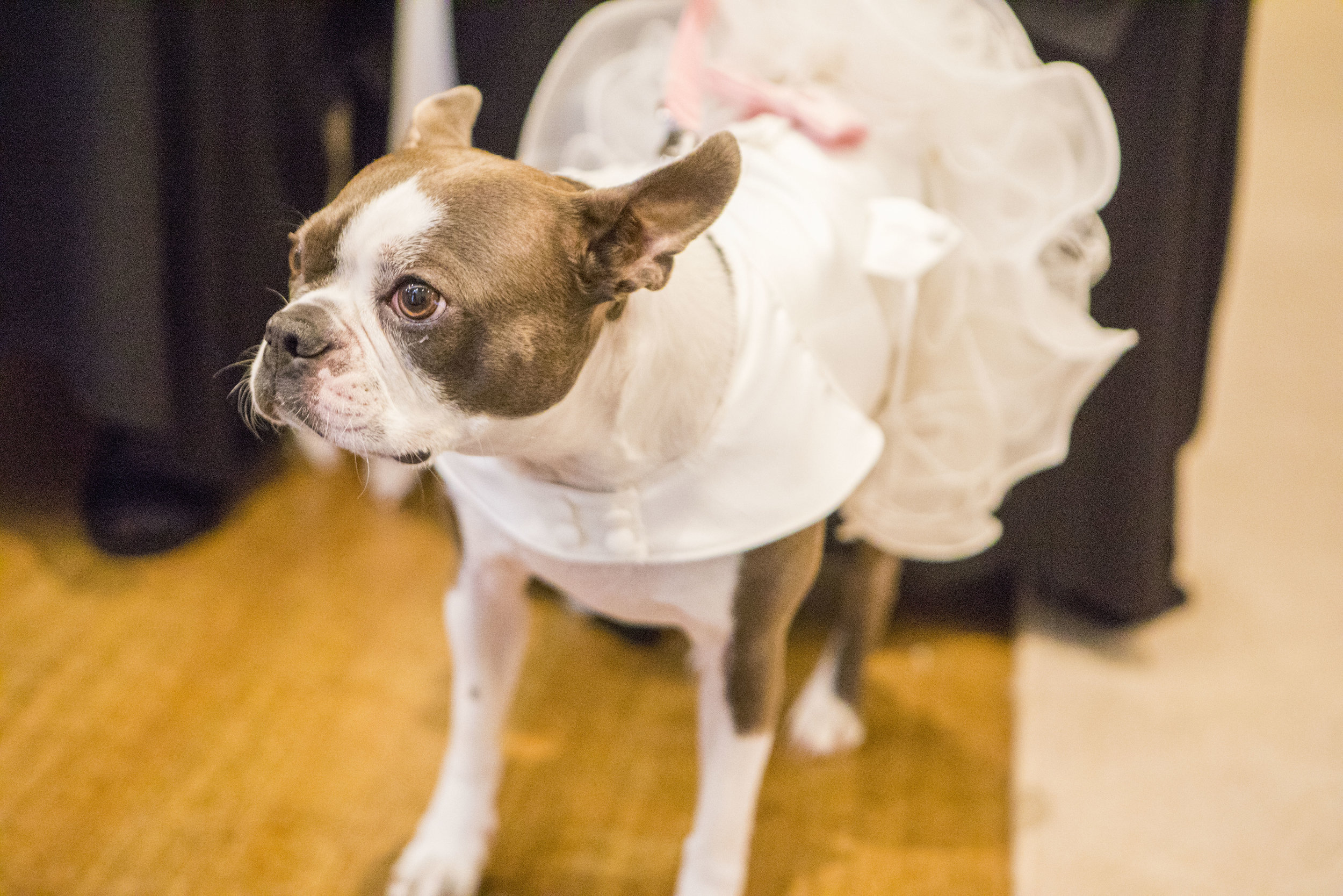 dog in a bridesmaid dress