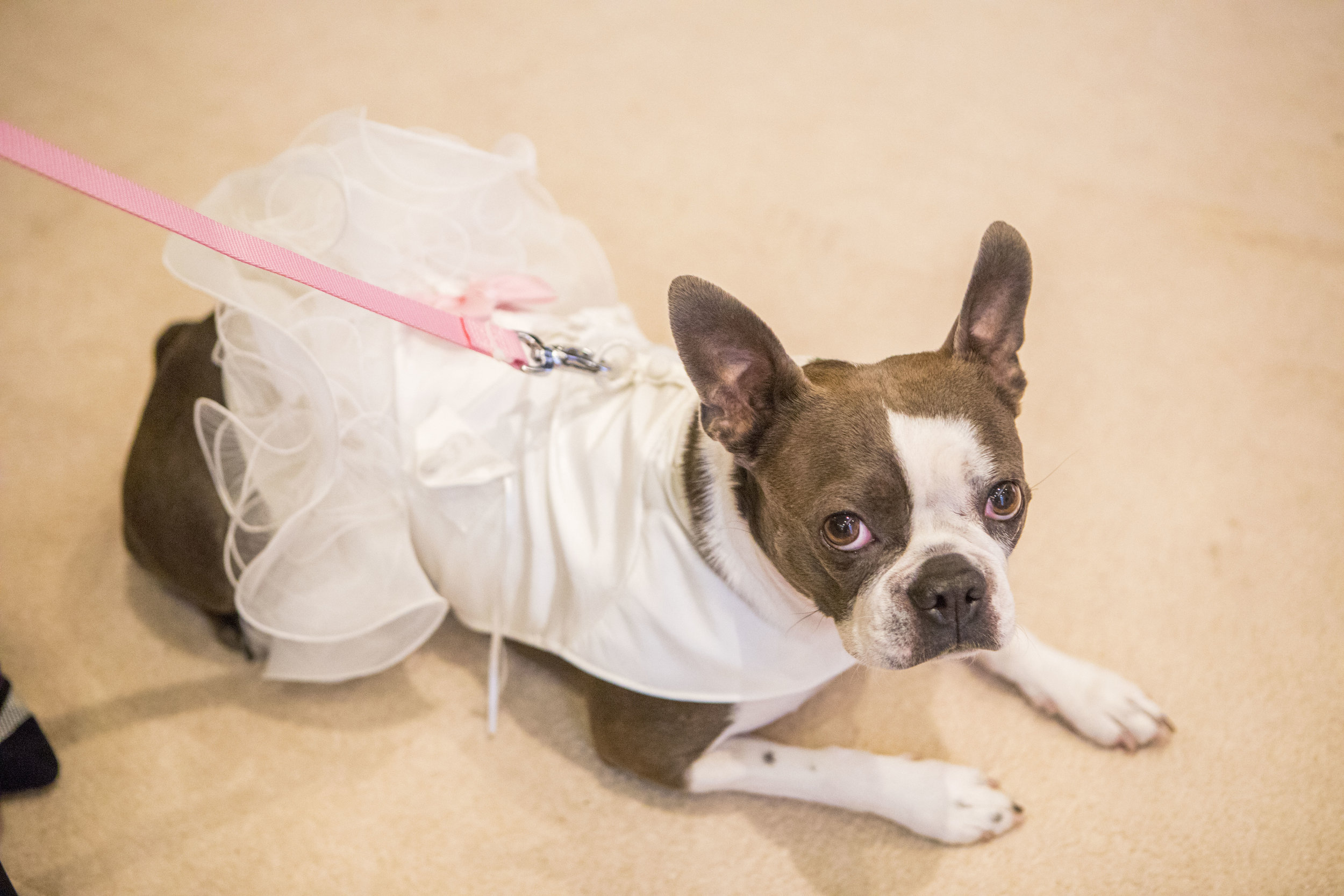 dog bridesmaid at a wedding