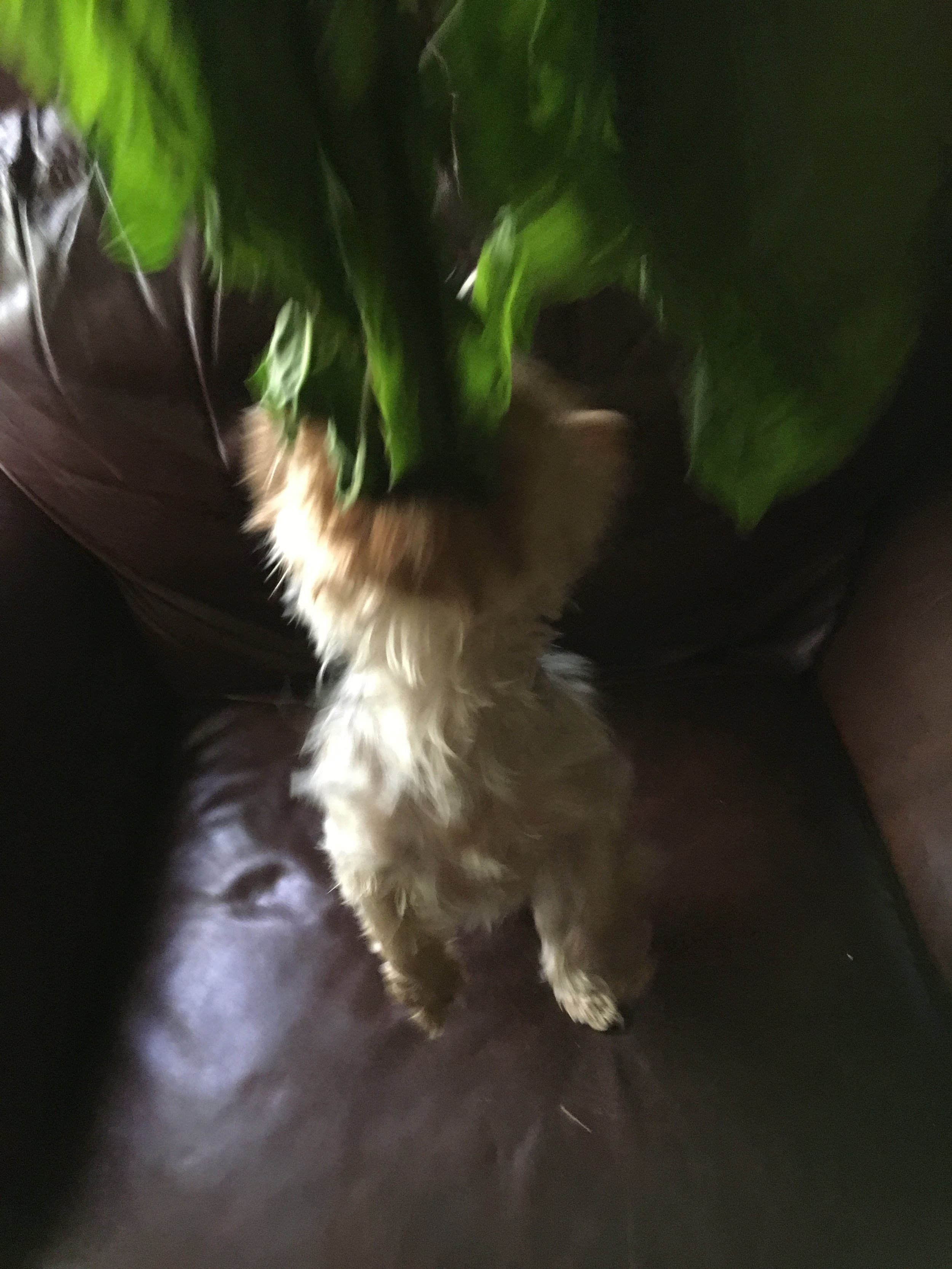 Action: Lou attacking a piece of chard.