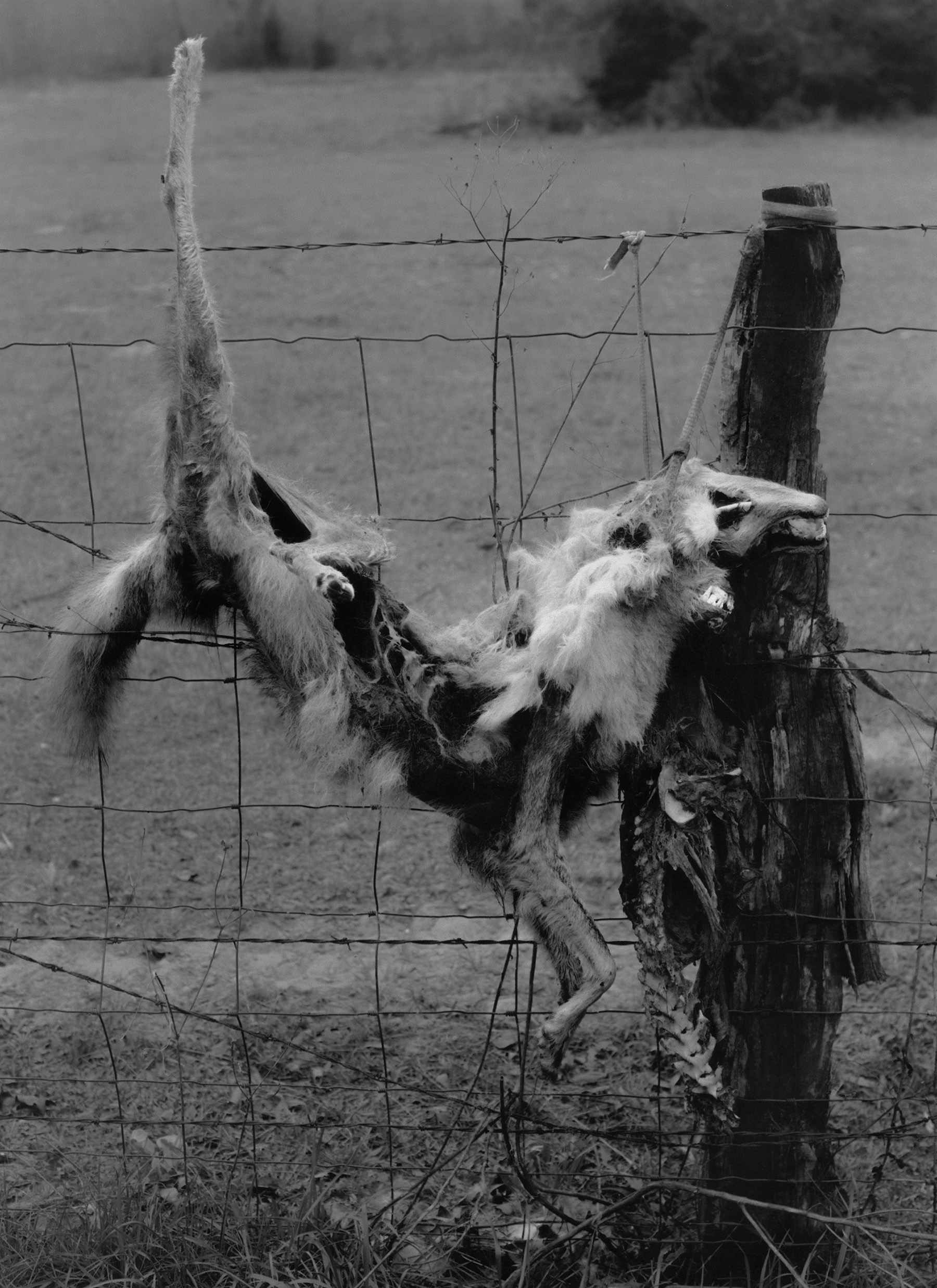 22_coyote.jpg