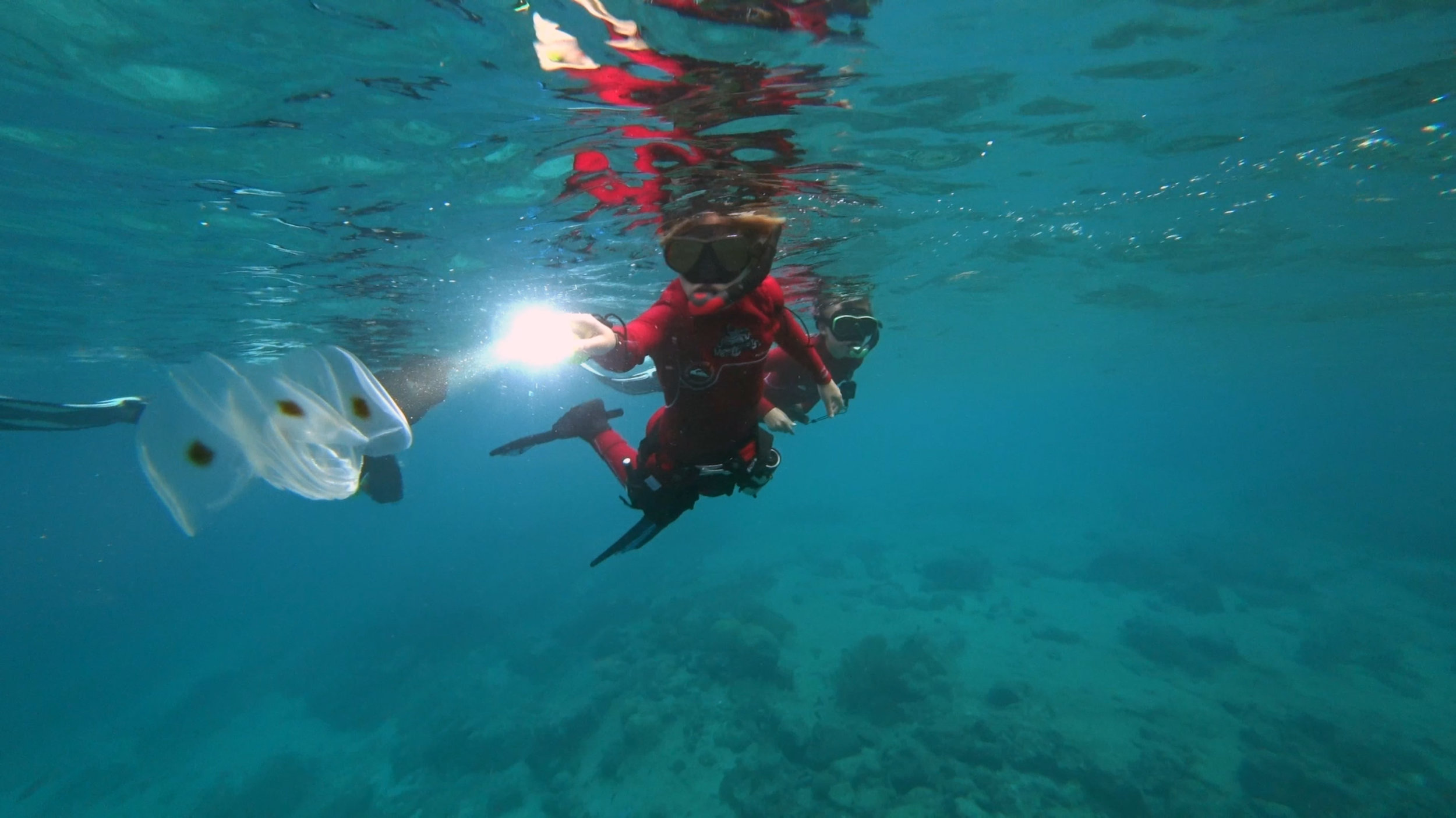 Diving - Connor views comb jelly.jpg
