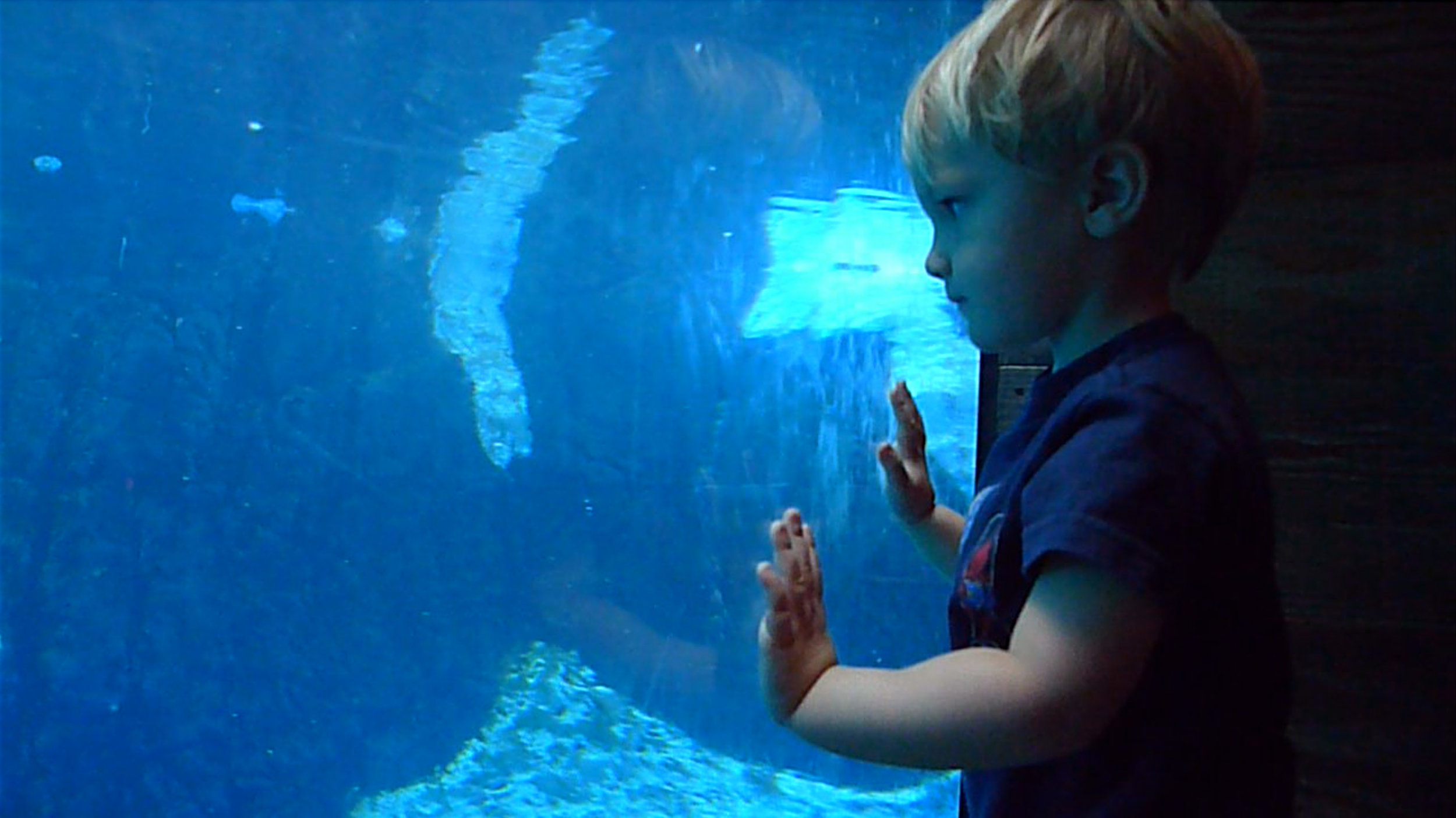 young - love of water creatures.jpg