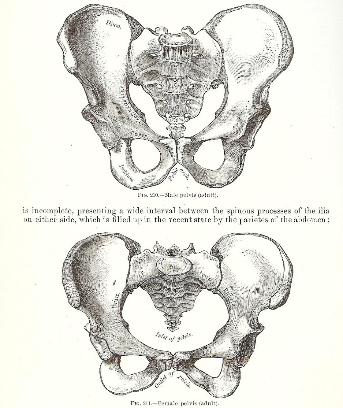 pelvis graphic 001.jpg