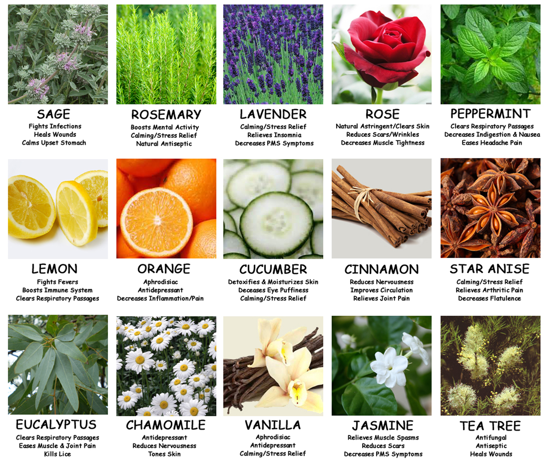 young-living-body-unburdened-everyday-essential-oils.jpeg