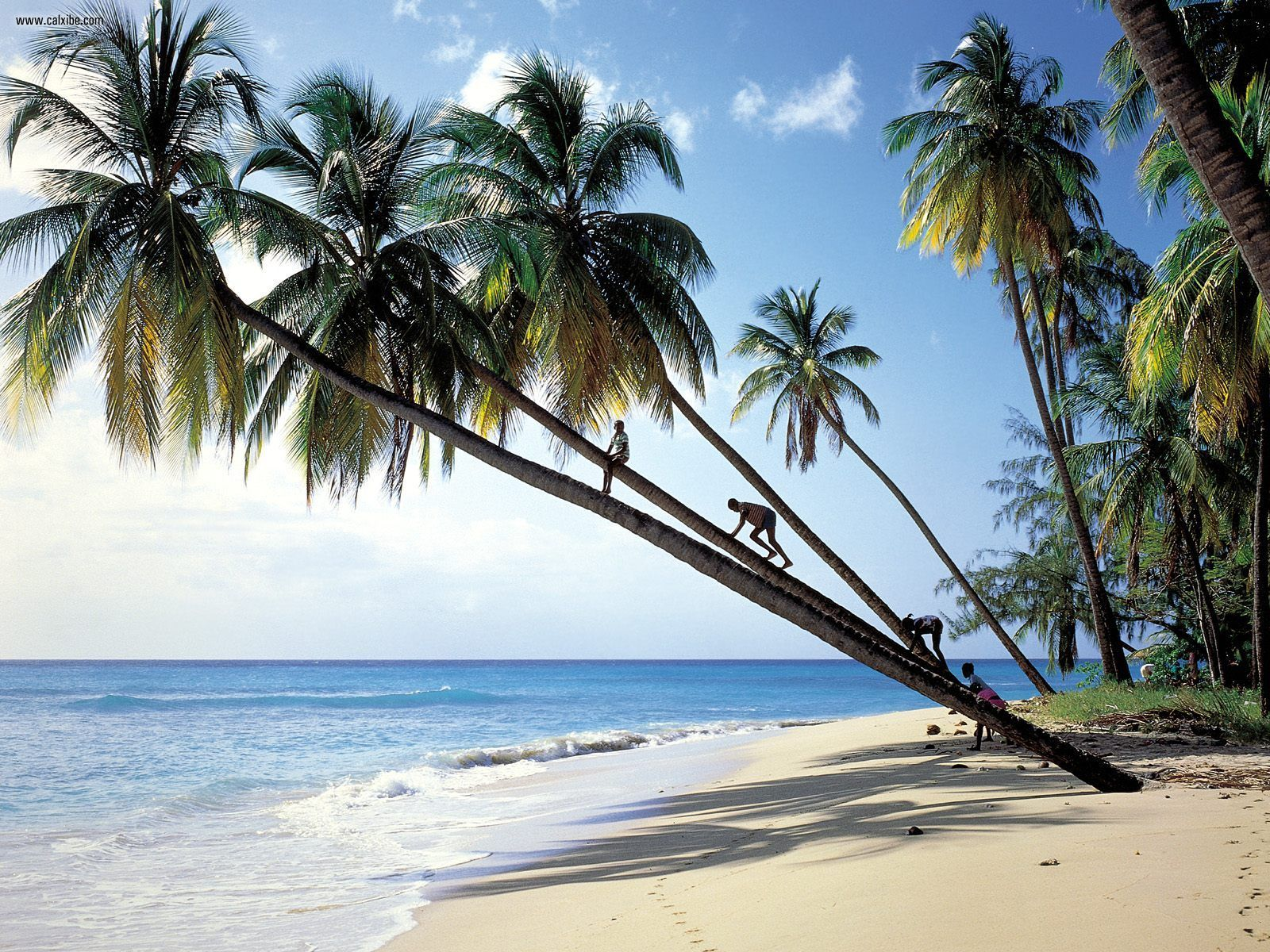 Gibbs_Beach_Mullins_Bay_Barbados.jpg