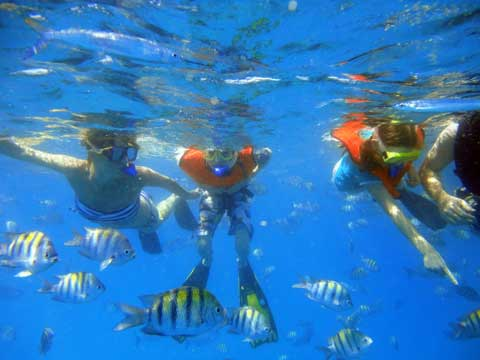 snorkeler-and-fish-with-barbados-blue.jpg