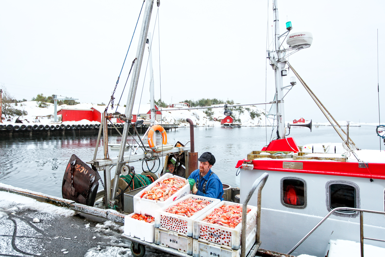Daglig hele året blir det brakt i land fangst til fiskemottaket i Utgårdskilen på Hvaler. Her fra en kald og gusten dag i januar. Fiskeren losser i land en solid fangst med sjøkreps.