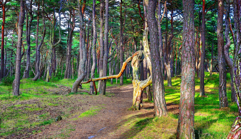 Prestegårdsskogen Hvaler