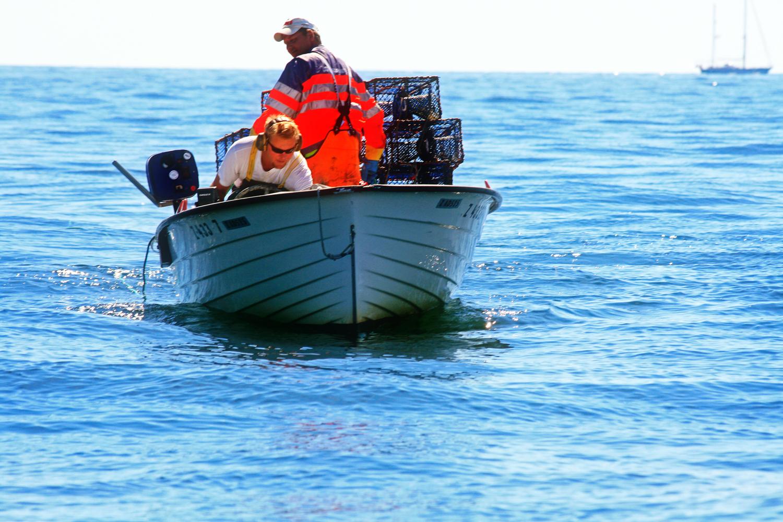 krabber-hvaler-Bilde-5.jpg