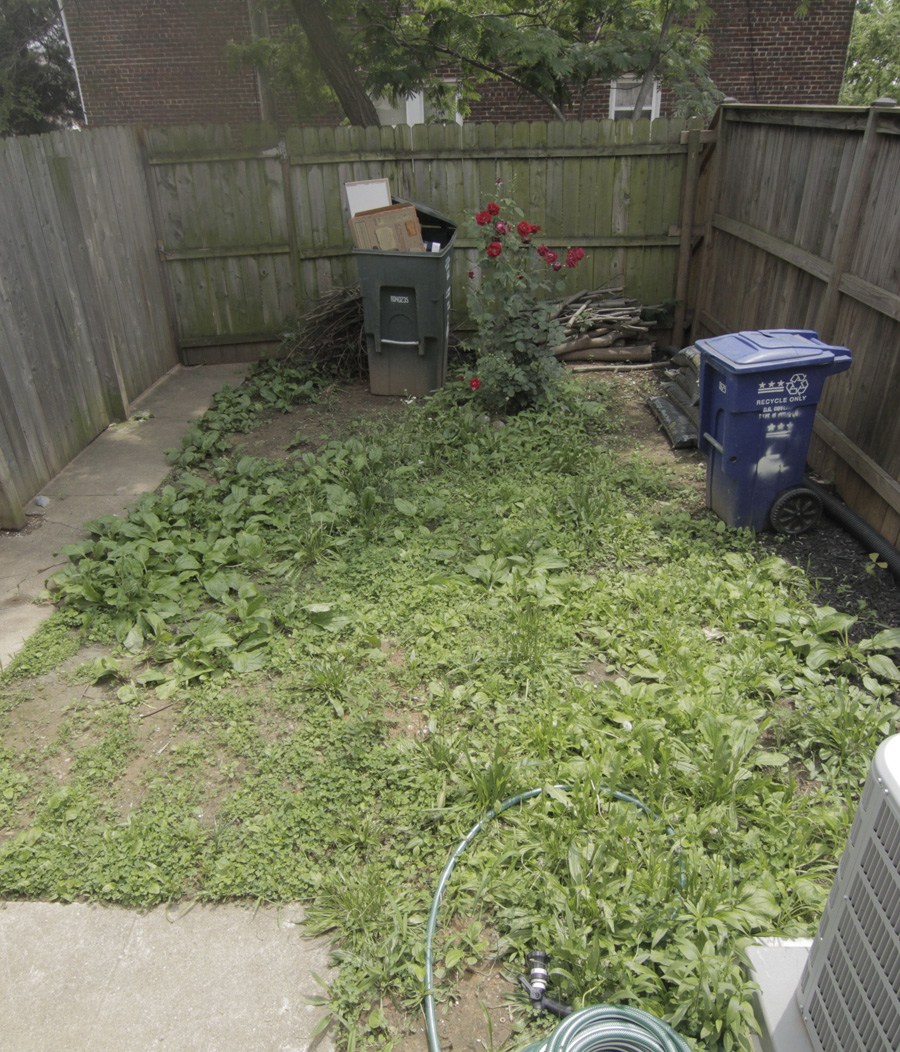 Before: Back yard on move in day was all weeds