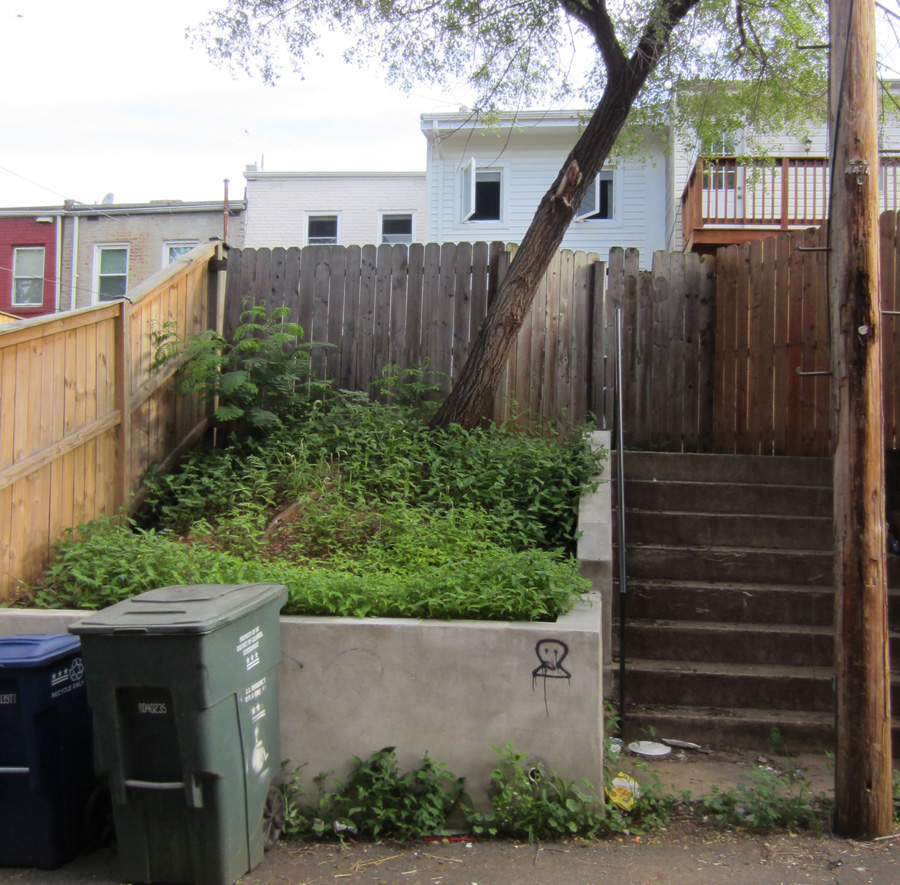 Before: the very back of the yard that faces the alley