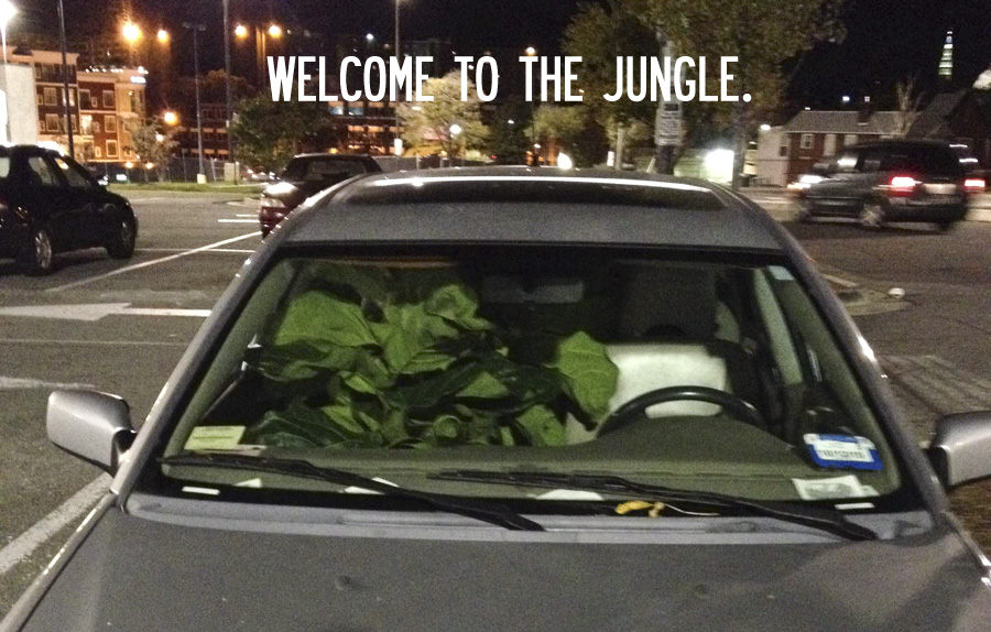 Welcome to the jungle – Eli's car full of plants.
