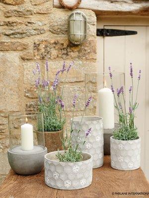 Artificial plants and concrete planters