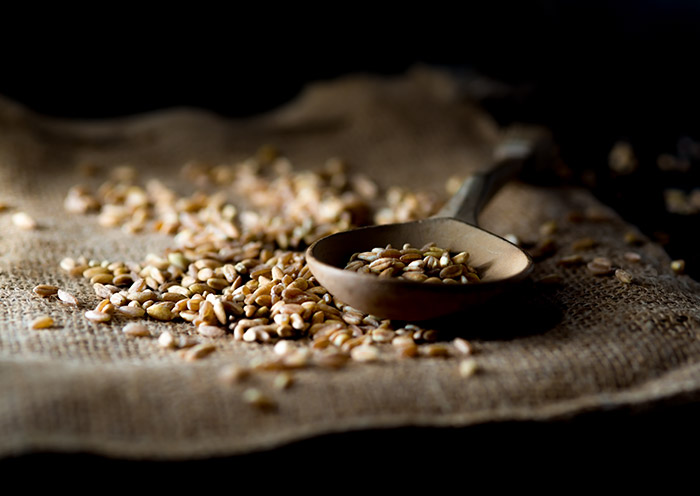 Farro Grain Stock Food Photo