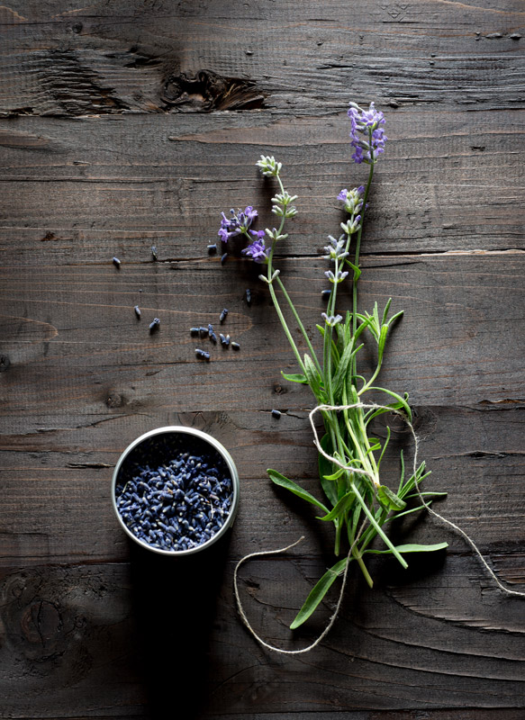 Lavender Herb Stock Photo