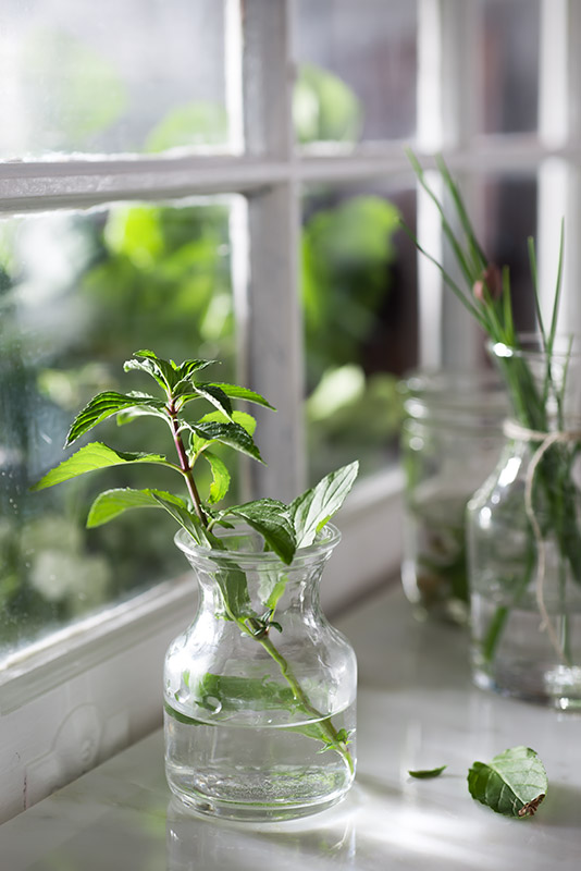 Fresh Mint in a Vase on a Windowsill in a Farmhouse Kitchen Stock Photo