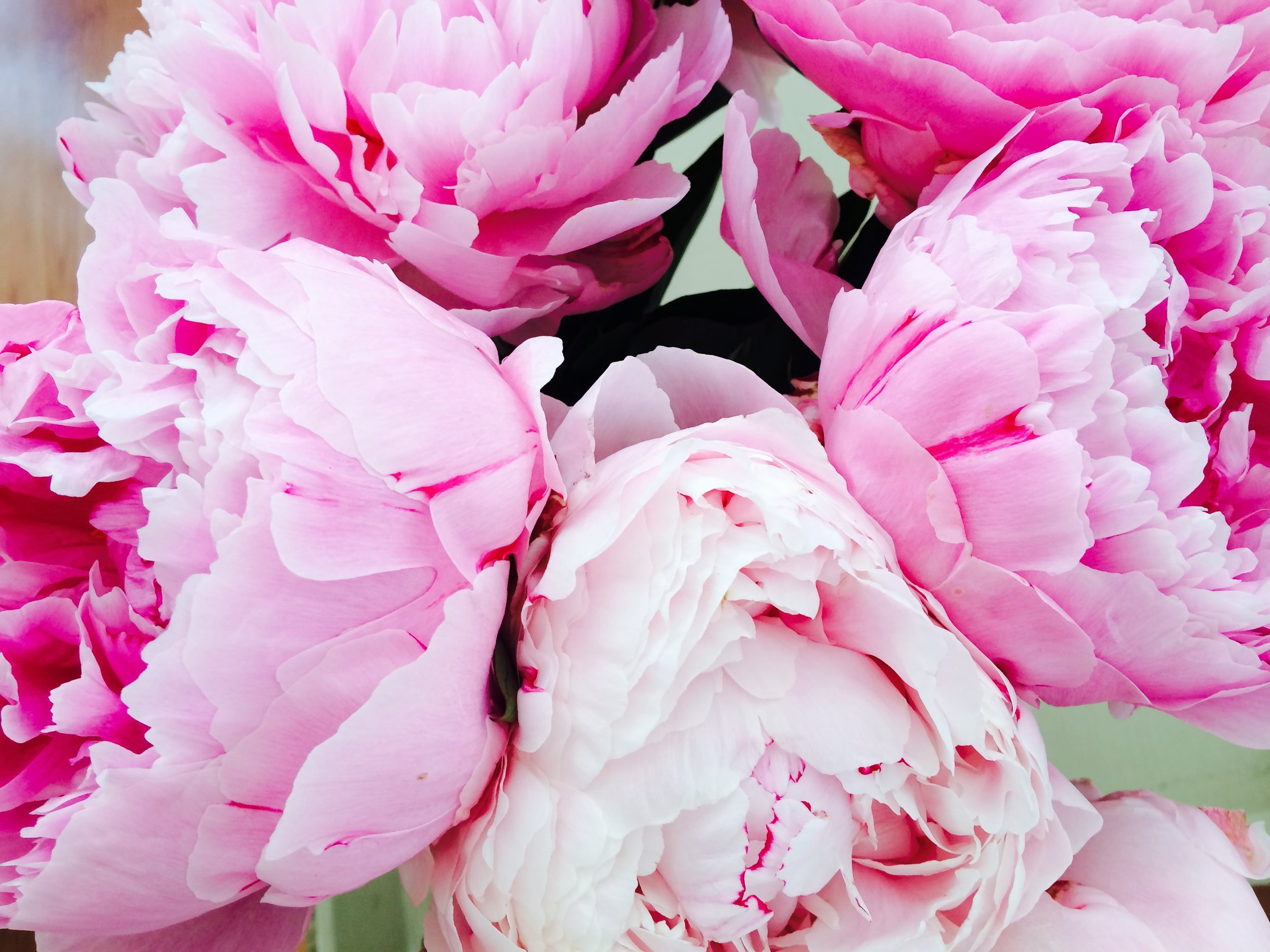 Peonies found at a Parisian market