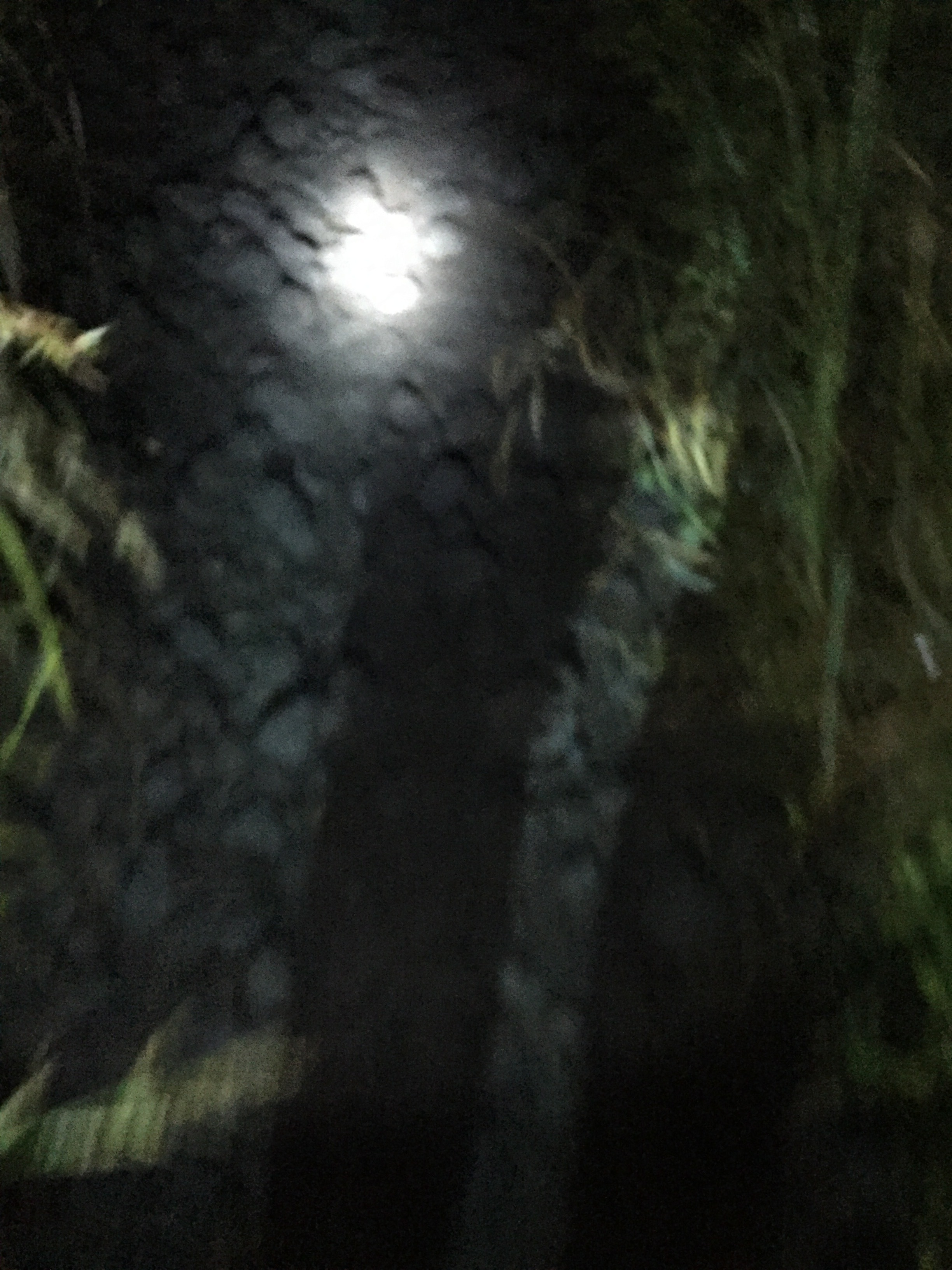 The first half of the hike with the flashlight
