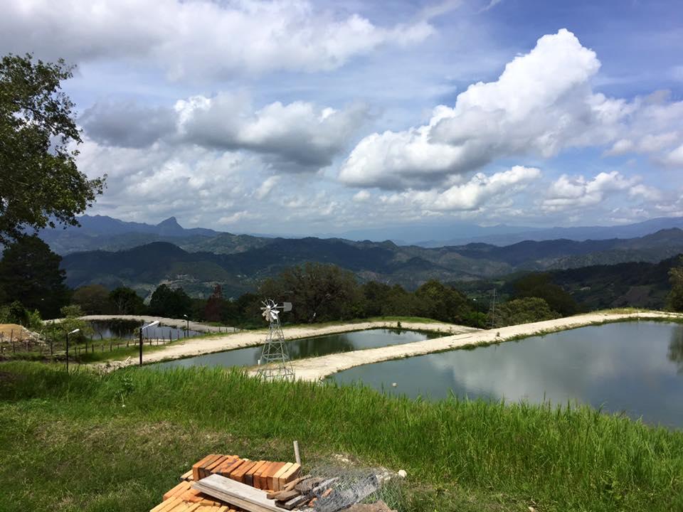 tilapia farms.jpg