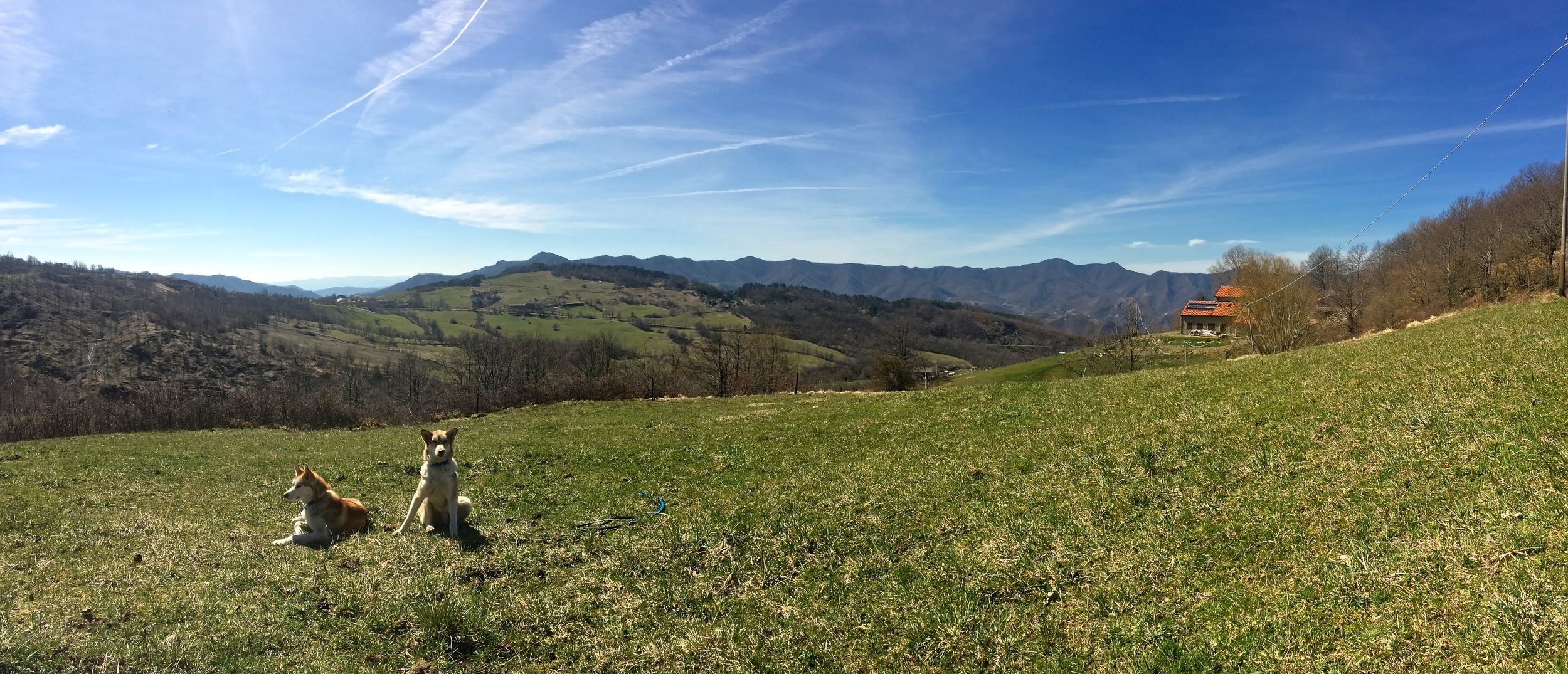Lupa and Balto enjoying freedom in the fields before the cows arrive for the summer. The Rifugio is visible to the right in this photo, surrounded by the rural and sparsely populated hills and peaks of the Apennines of Romagna.