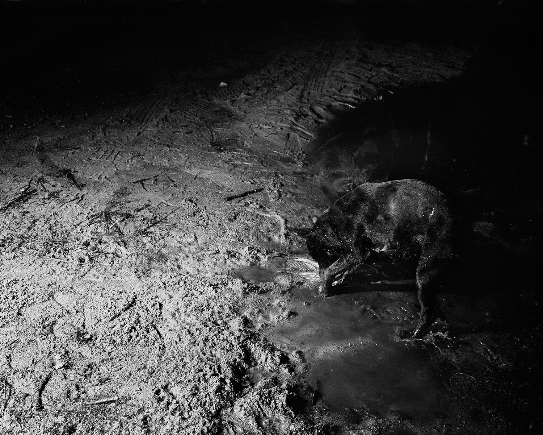 Scott Alario, Moon Mud, 2013