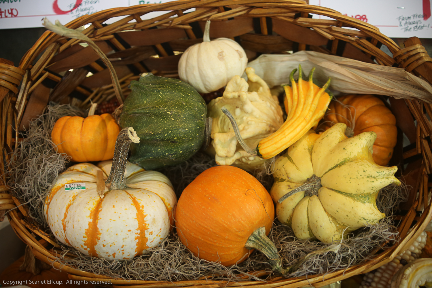 squash, pumpkins, gourds go up for sale at the market