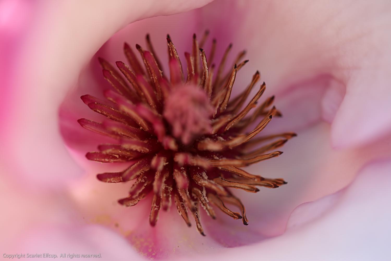 Pollen in Spring-1.jpg
