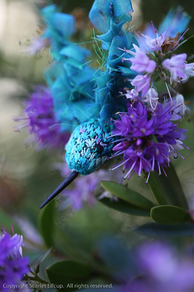 Hummingbird-113.jpg