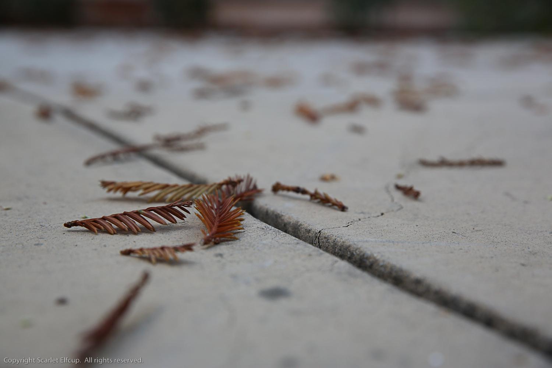Fall Critters-1.jpg
