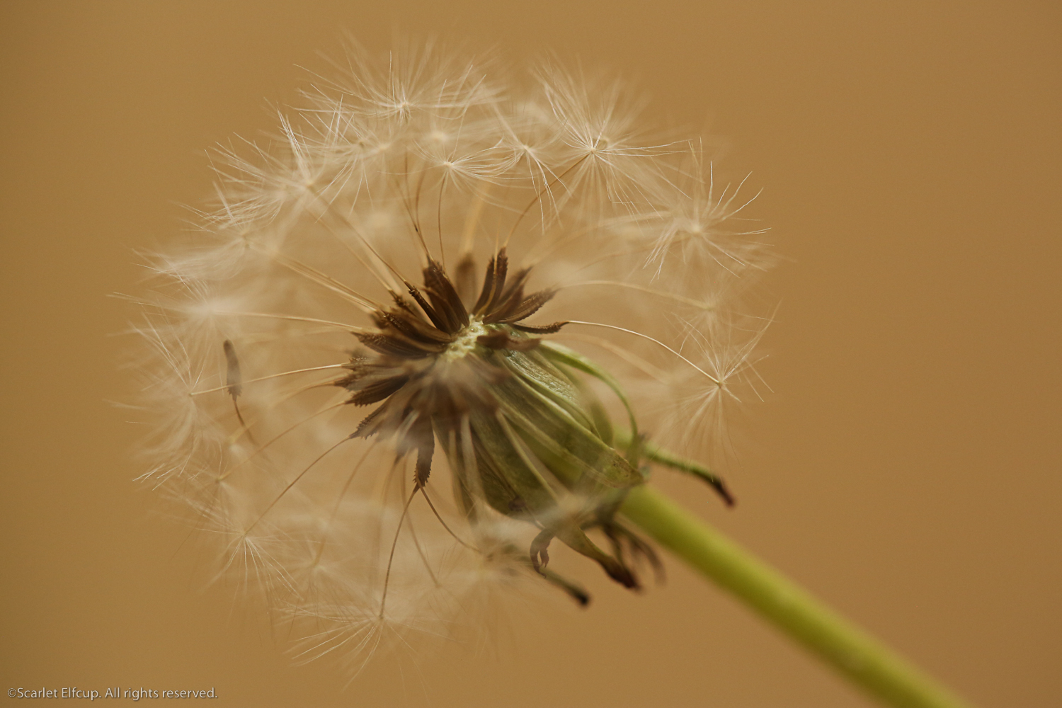 Raindrops and Dandelions-24.jpg