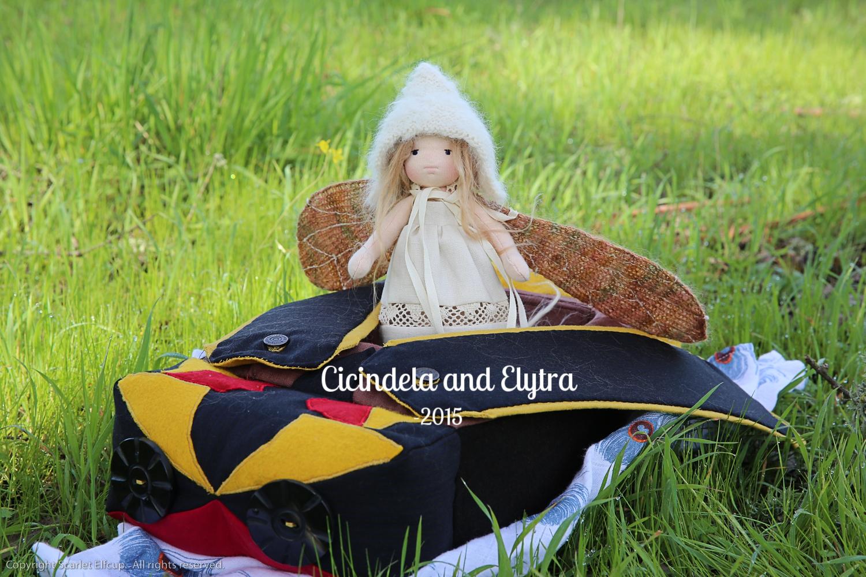 Cicindela and Elytra-33.jpg