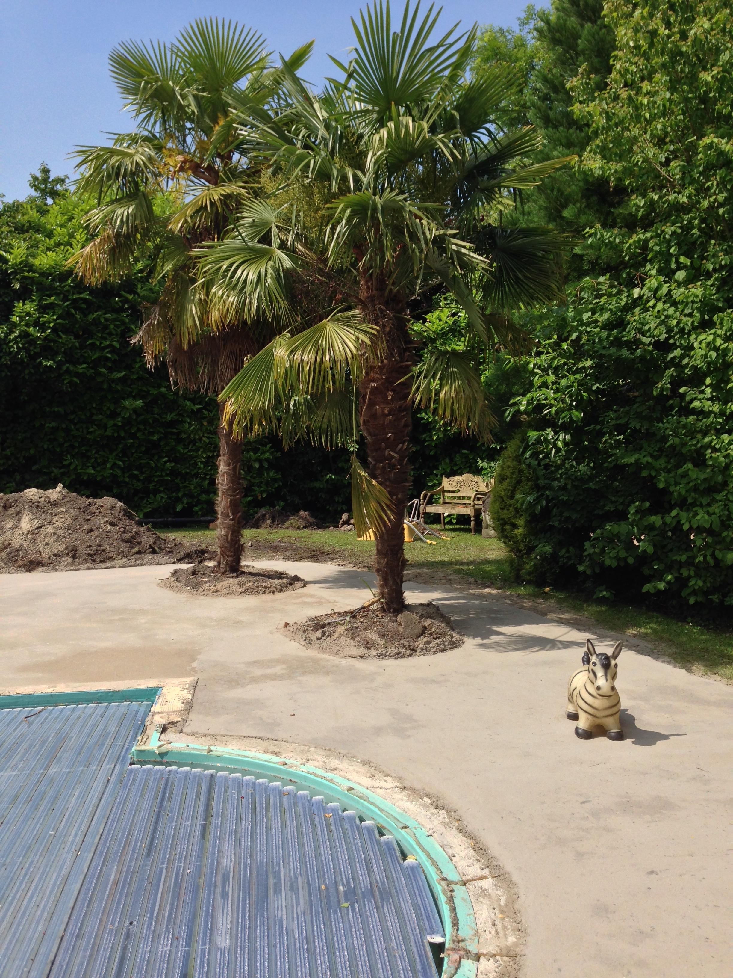 flagstones fundering zand-cement rondom 2 palmbomen
