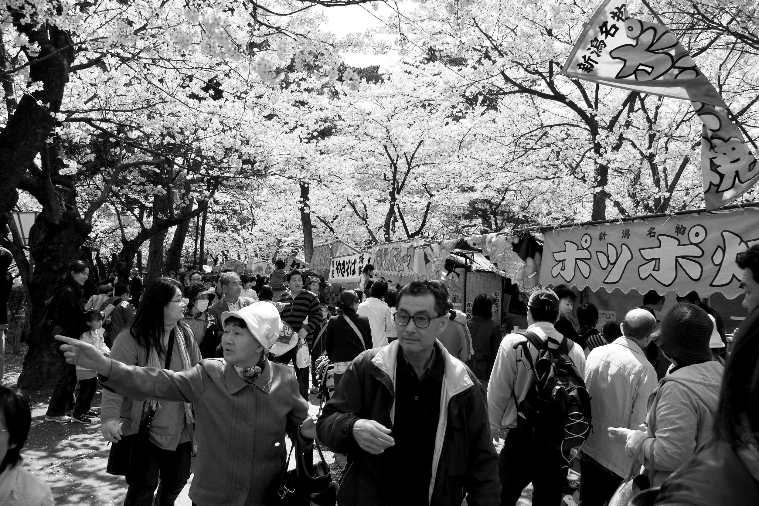 This Way, Dear. (Takada Koen, Niigata)
