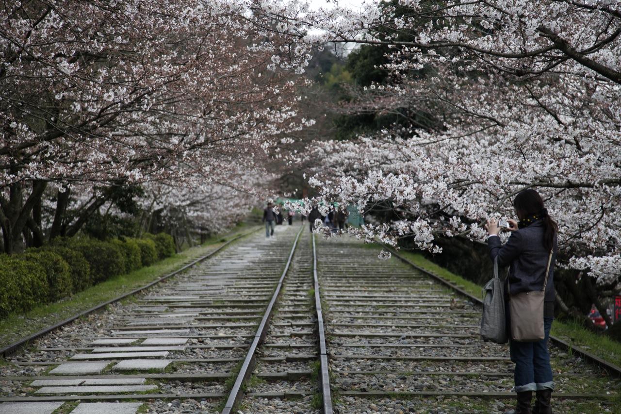 Snapping Up Sakura (Kyoto)