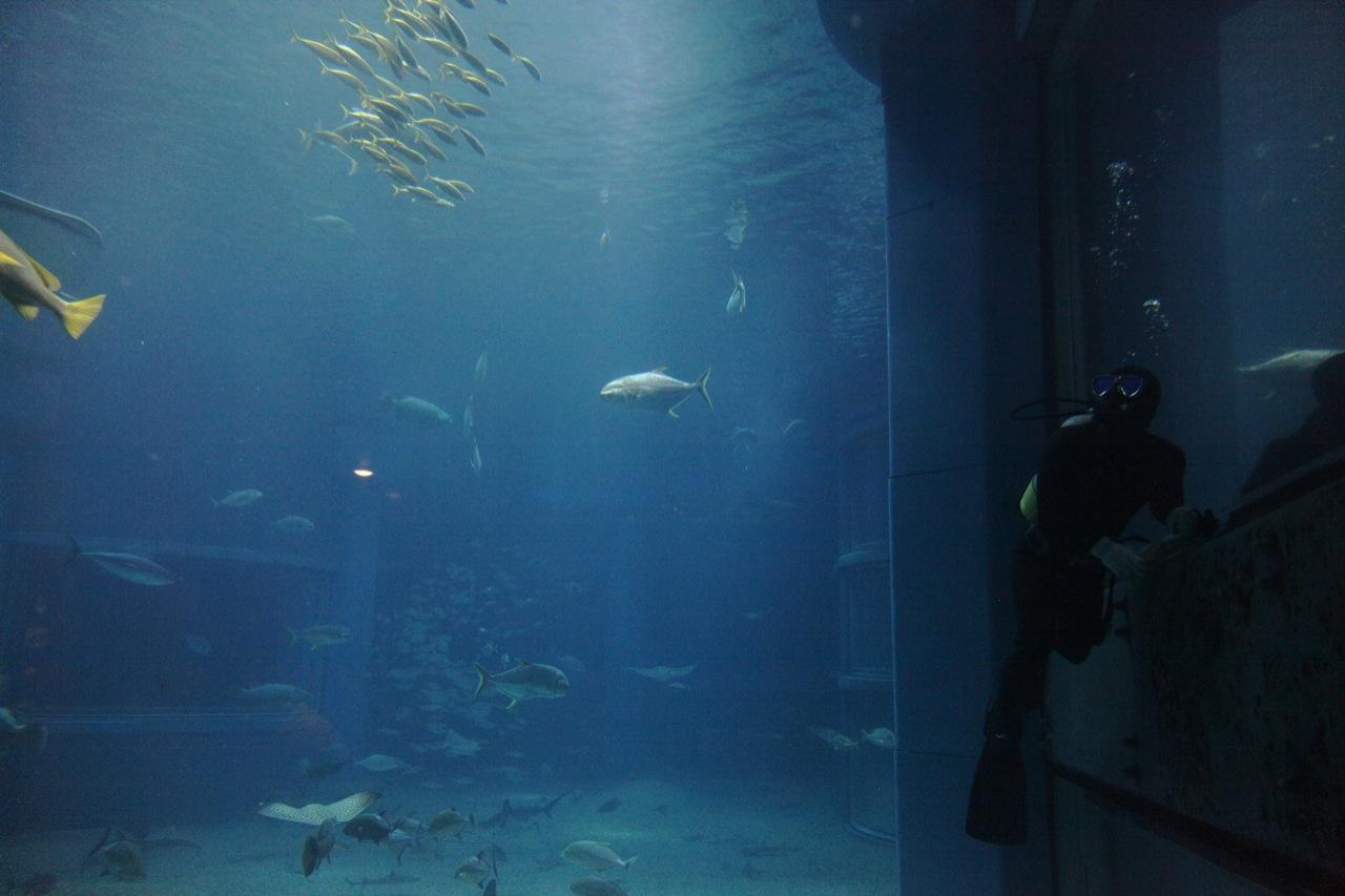 The Diver (Kaiyukan, Osaka)