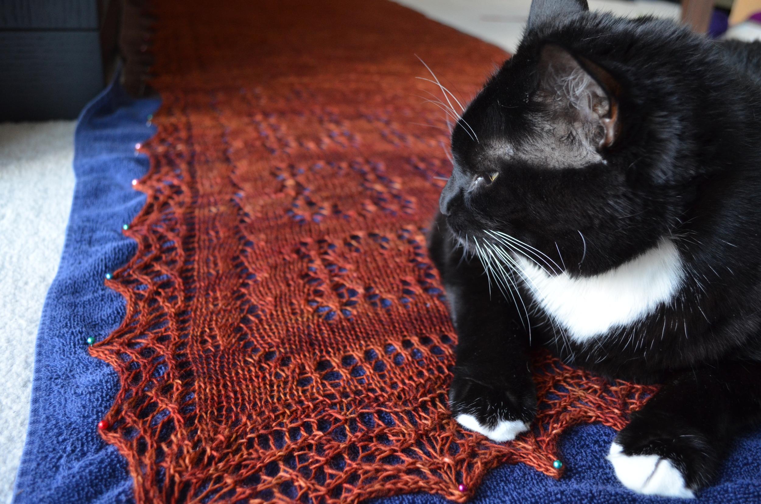 blocking / knitting / cute cat / warporweft.com