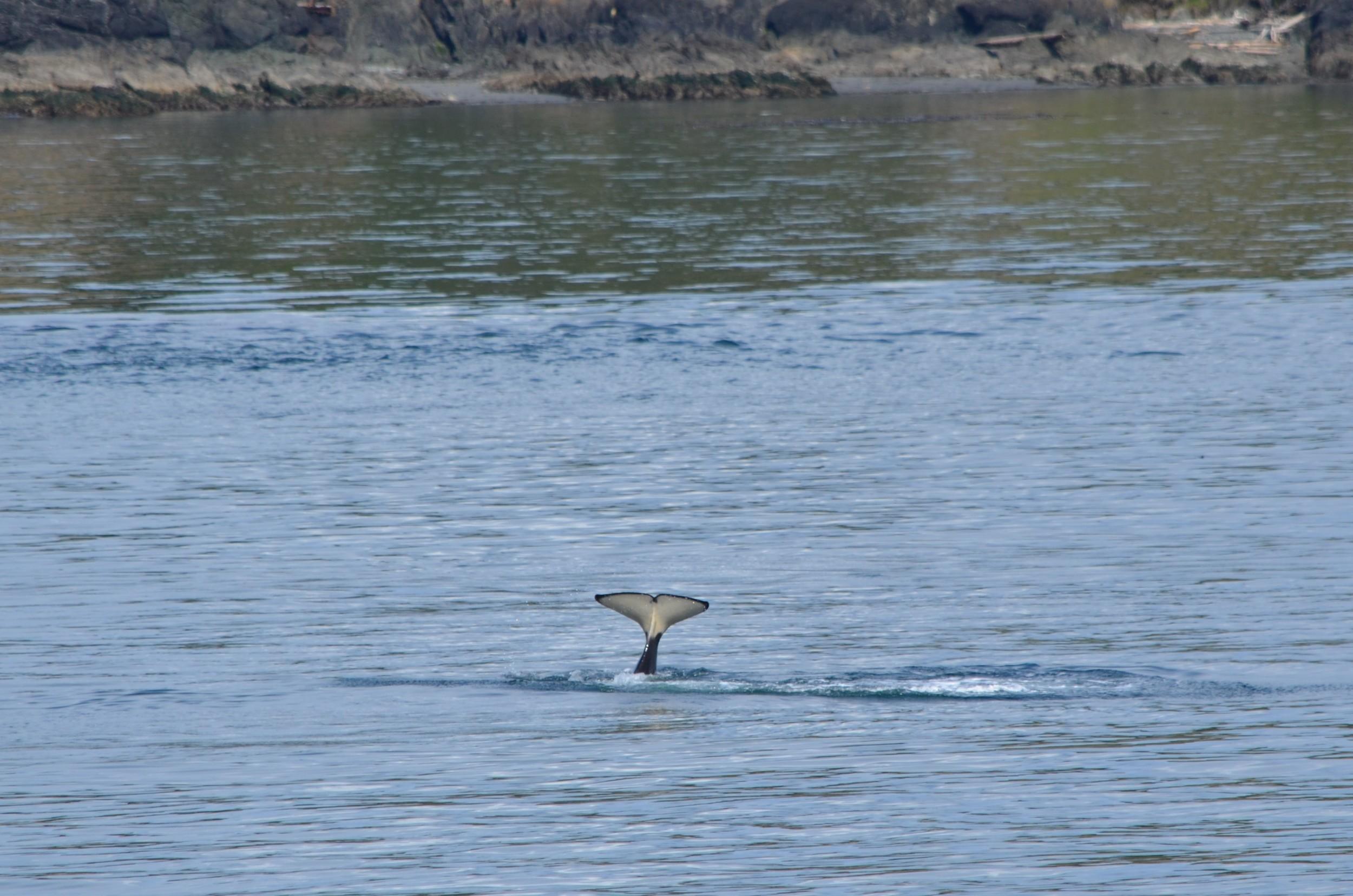 orca tale / warporweft.com