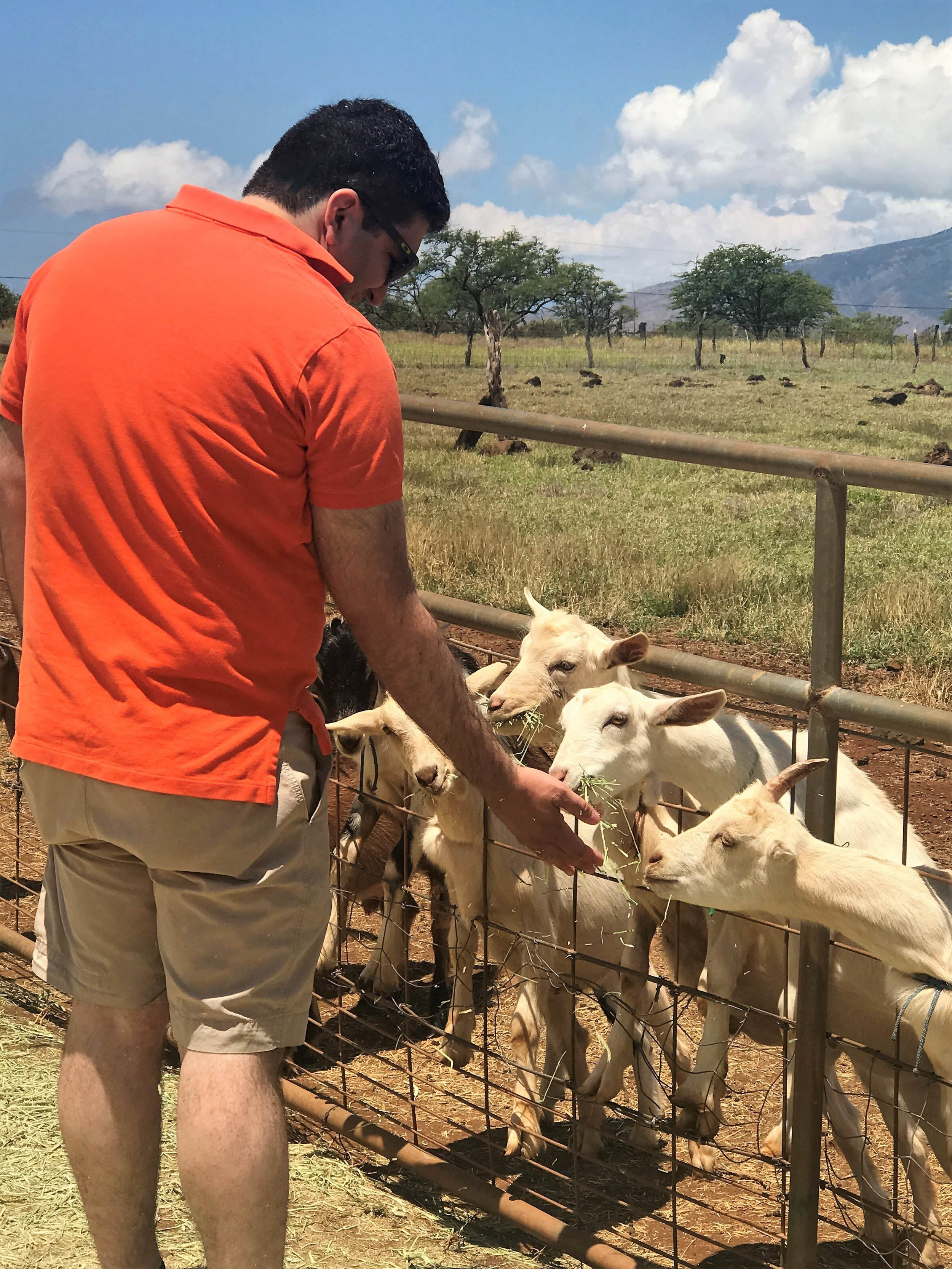 Feeding the goats at Surfing Goat Dairy on Maui / warporweft.com