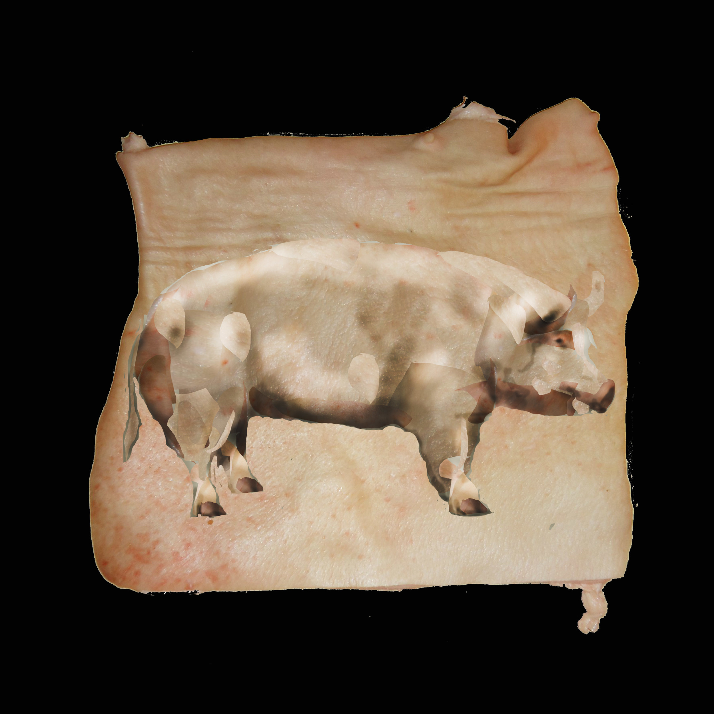 Pig made from skin through burning, dodging and cutting 2015