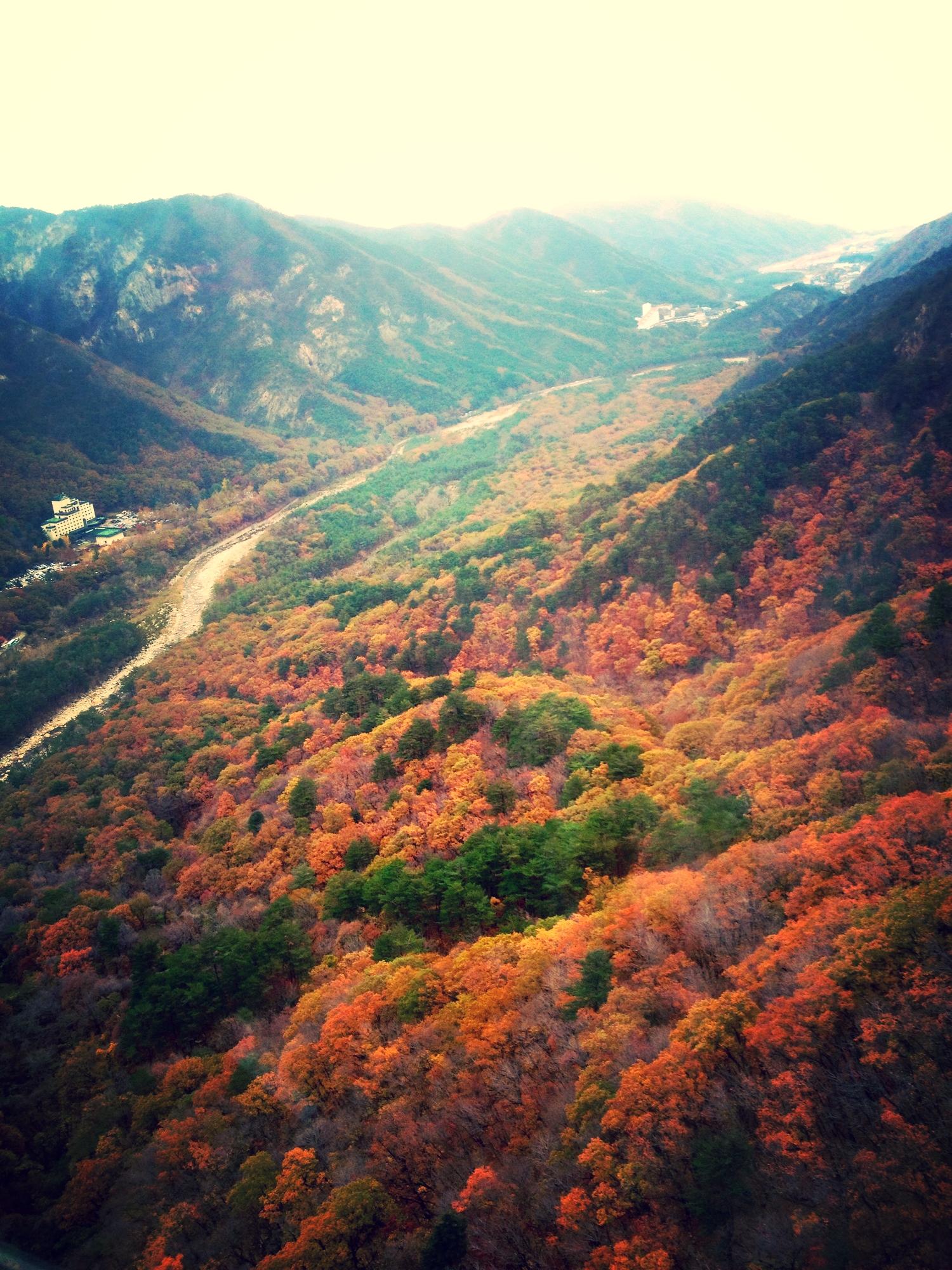 당풍 - my favourite part about having seasons.