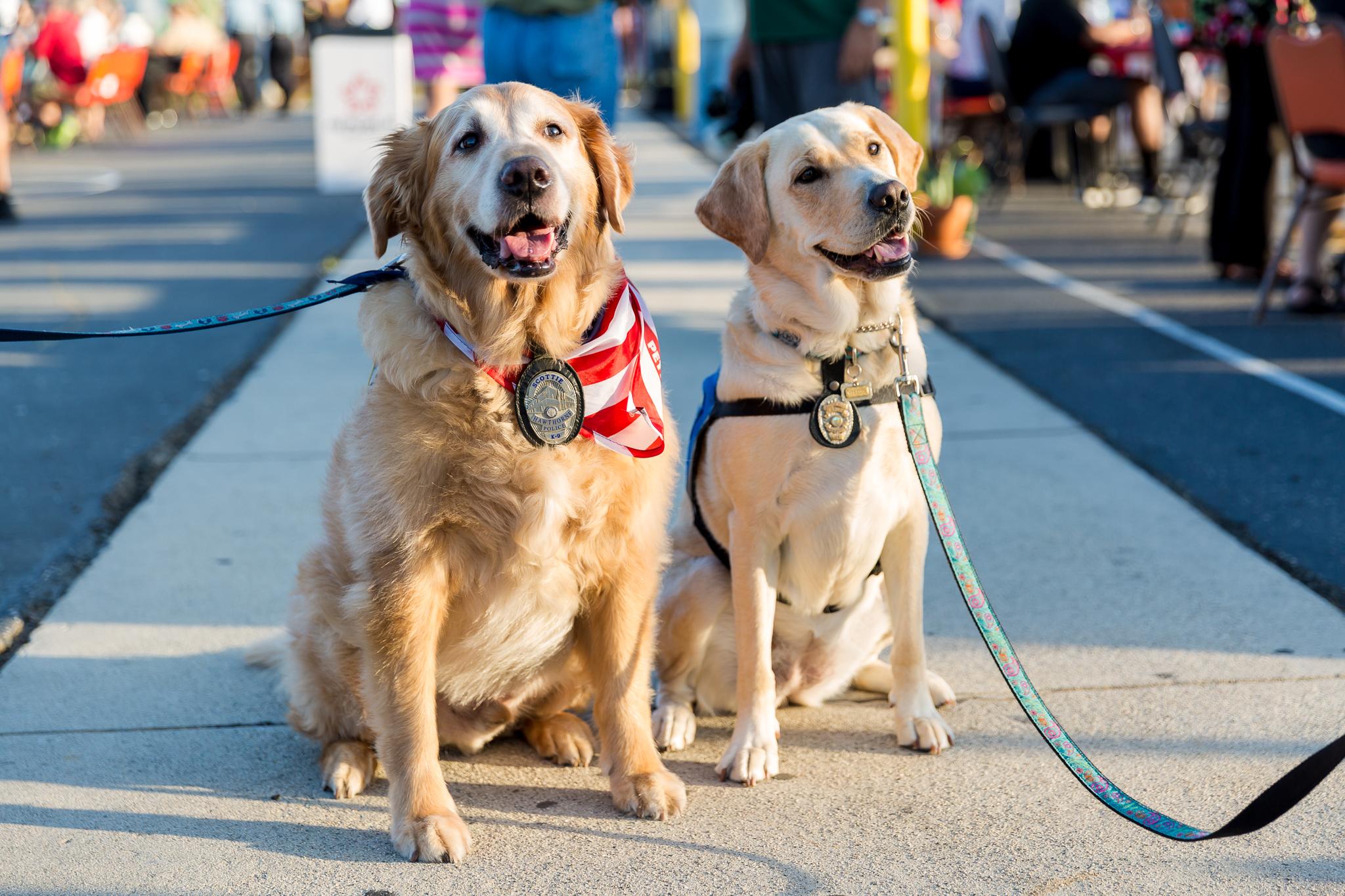 Police Service dogs