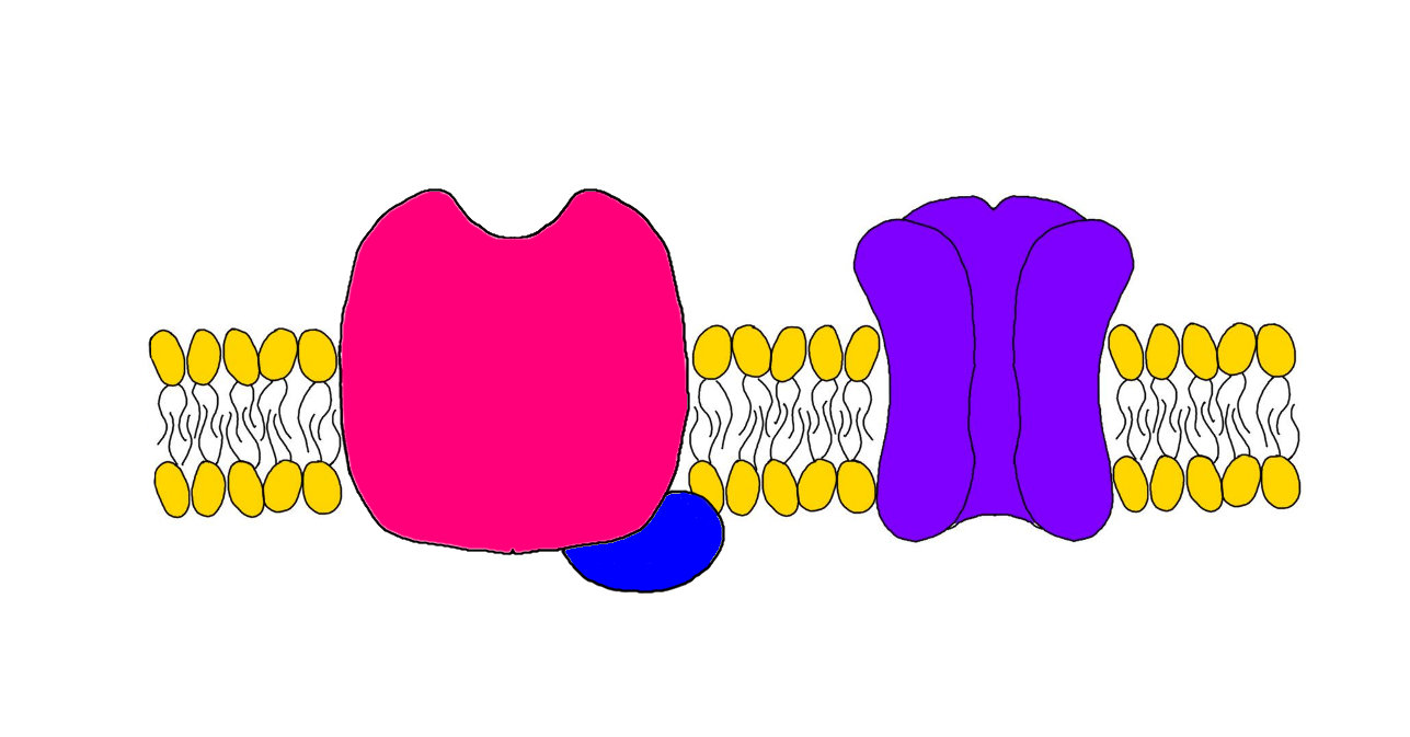 """2-Minute Neuroscience<a href=""""/blog/2-minute-neuroscience-receptors-and-ligands"""">→</a><strong>Receptors and Ligands</strong>"""