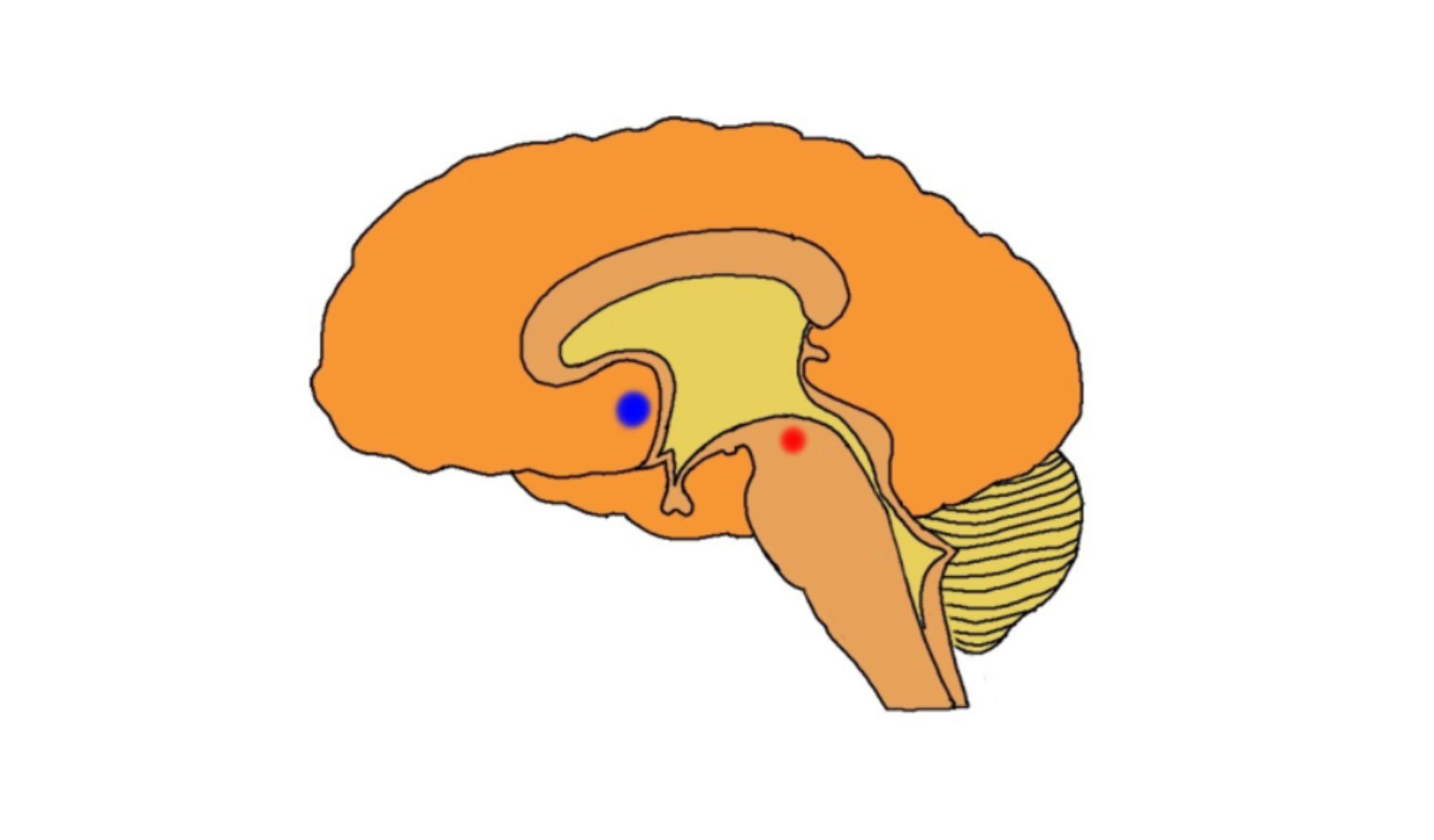 "2-Minute Neuroscience<a href=""/blog/2-minute-neuroscience-reward-system"">→</a><strong>Reward System</strong>"