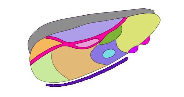 """2-Minute Neuroscience<a href=""""/blog/2-minute-neuroscience-thalamus"""">→</a><strong>Thalamus</strong>"""