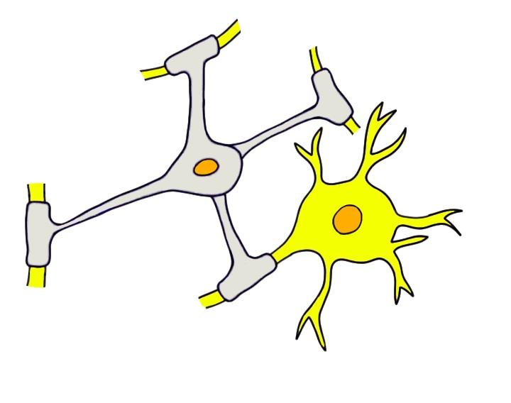 """2-Minute Neuroscience<a href=""""/blog/2-minute-neuroscience-myelin"""">→</a><strong>Myelin</strong>"""