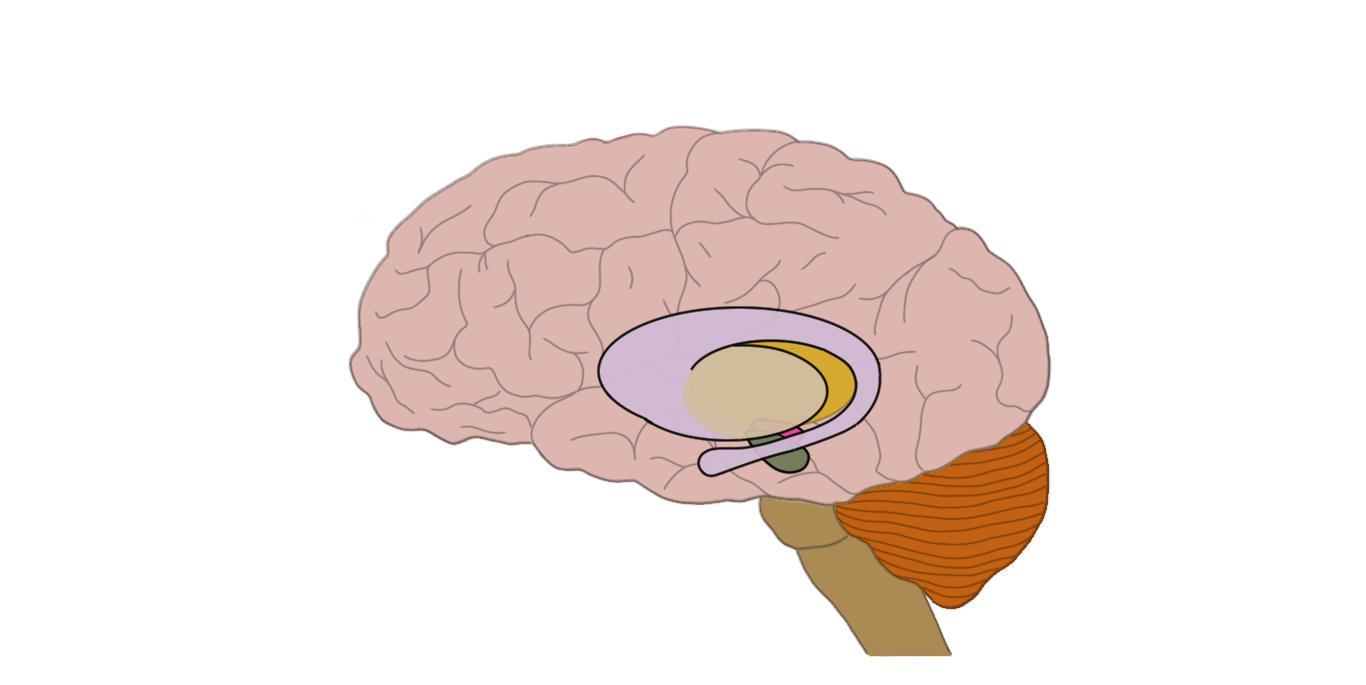 "2-Minute Neuroscience<a href=""/blog/2-minute-neuroscience-parkinsons-disease"">→</a><strong>Parkinson's Disease</strong>"