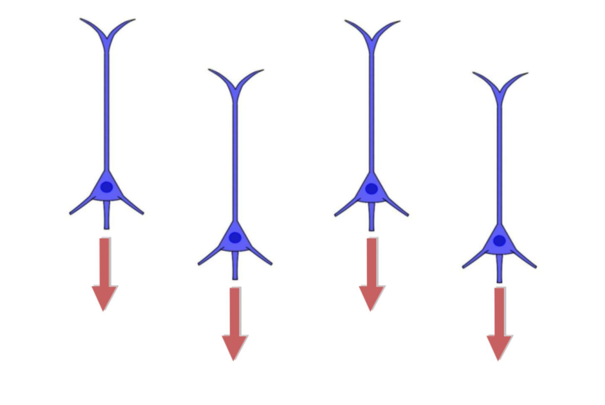 "2-Minute Neuroscience<a href=""/blog/2-minute-neuroscience-epilepsy"">→</a><strong>Epilepsy</strong>"