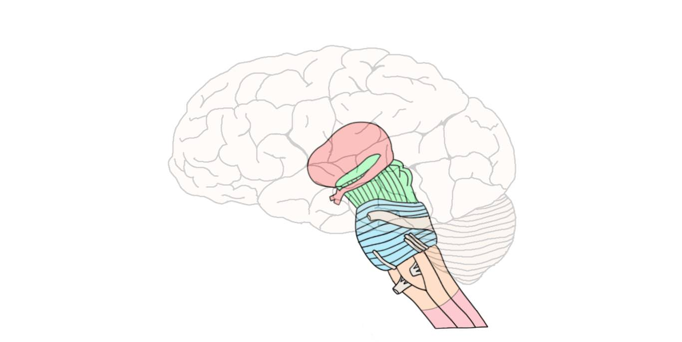 """<p>Know Your Brain<strong>Brainstem<a href=""""/blog/know-your-brain-brainstem"""">Read more →</a></strong></p>"""